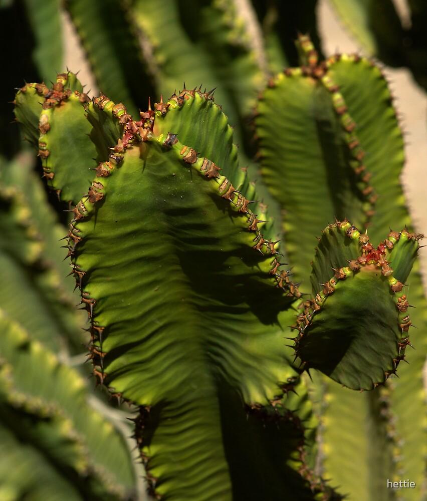 Cactus by hettie