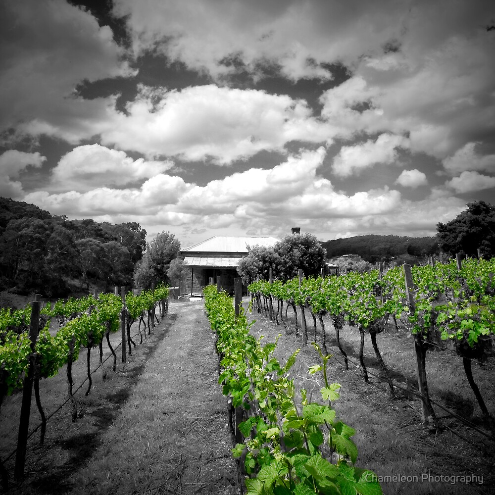 Vines by Chameleon Photography