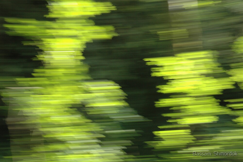 Abstract Forest by Bassam  Shmordok