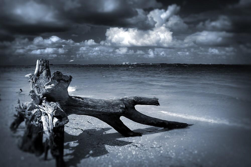 Tempest by Martyn Starkey