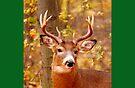 My Beautiful Antlers (card) by TerriRiver
