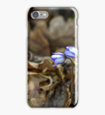 Two violets bloom iPhone Case/Skin