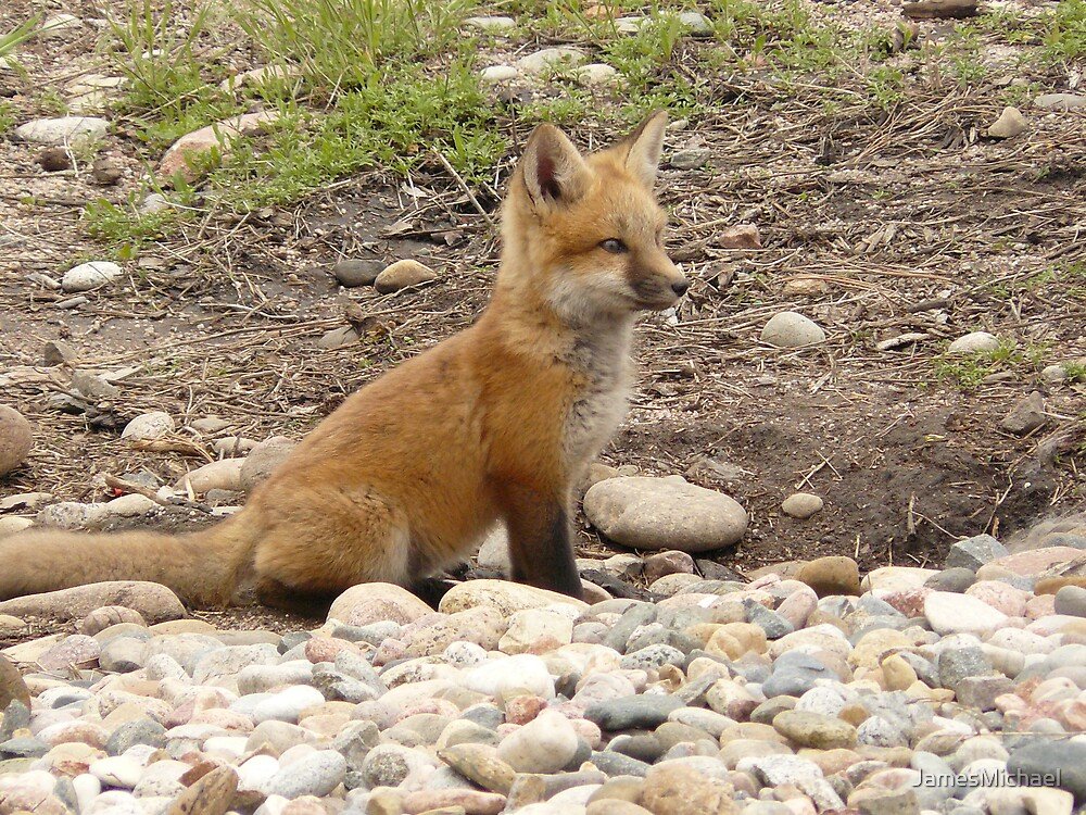 Baby Fox by JamesMichael
