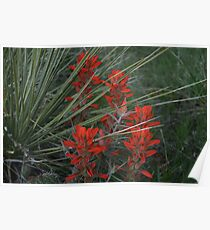 Yuca and Indian Paint Brush Poster