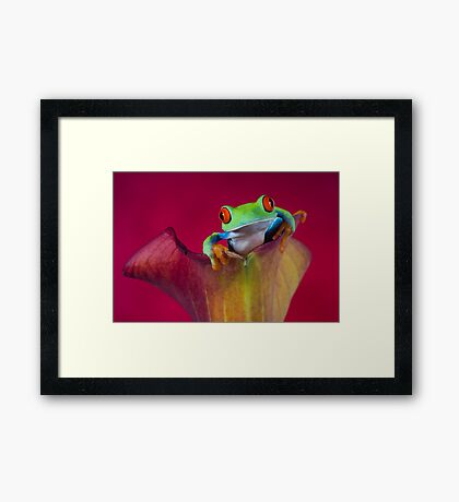 The little explorer Framed Print