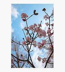 Blooms Photographic Print