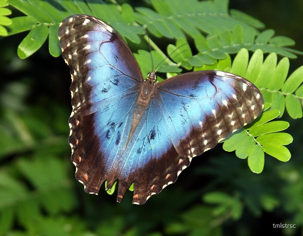Wings of Beauty by tmlstrsc