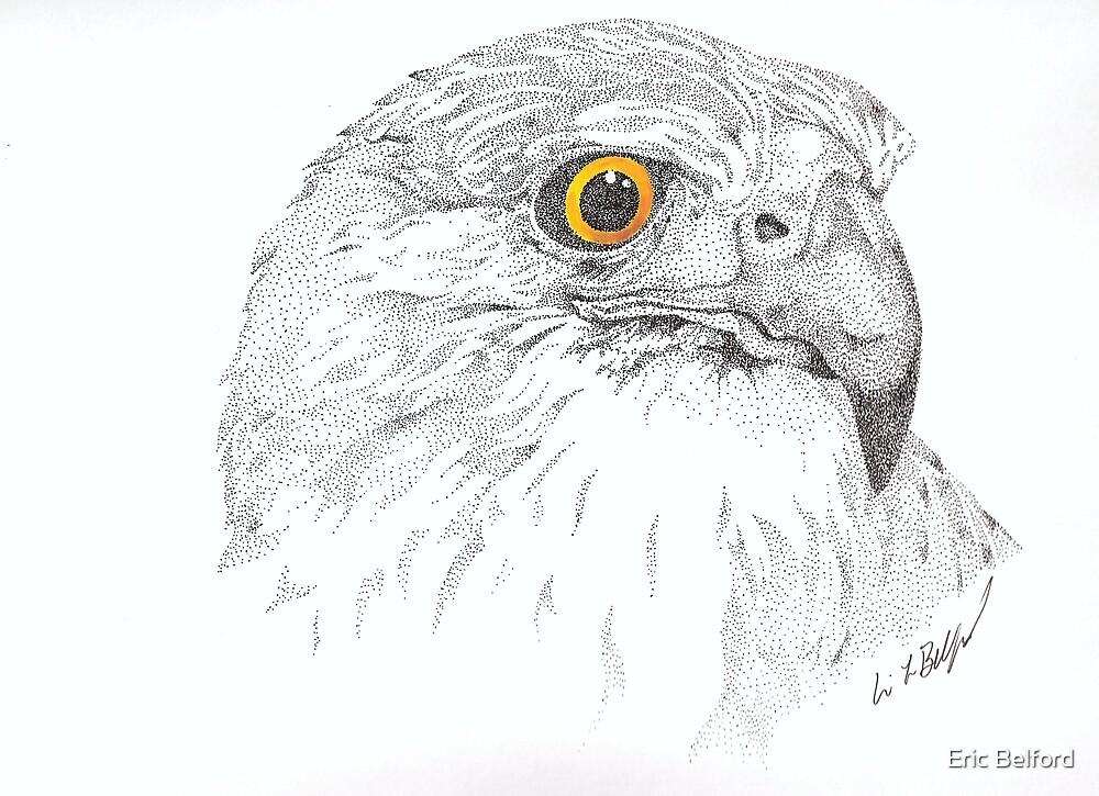 Hawk by Eric Belford