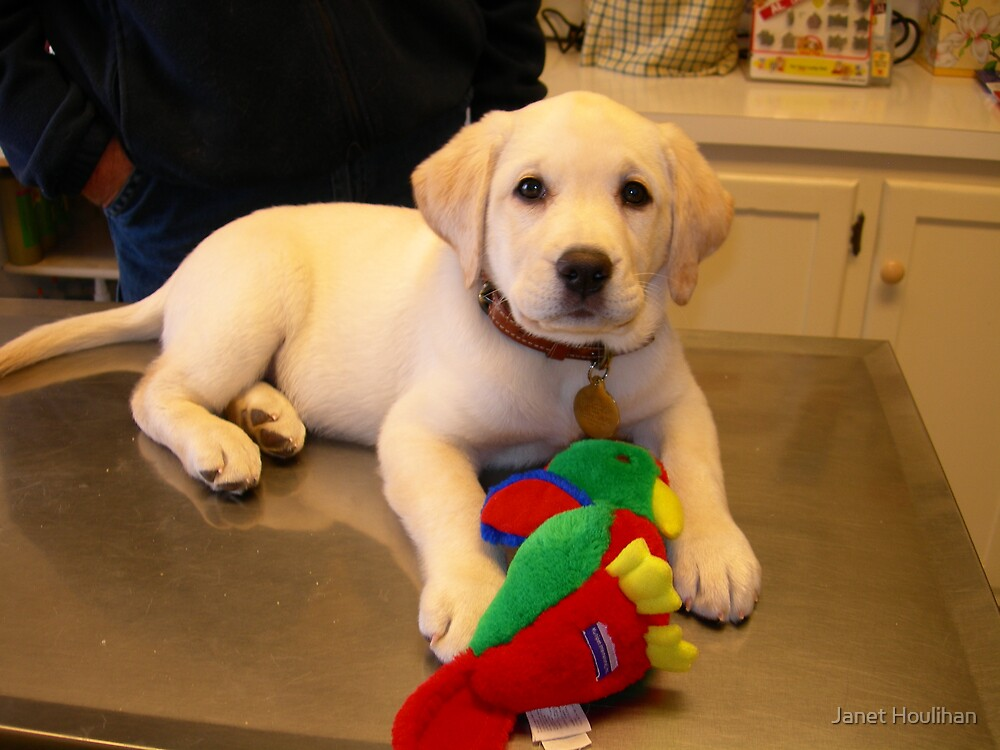 First visit to the Vet by Janet Houlihan