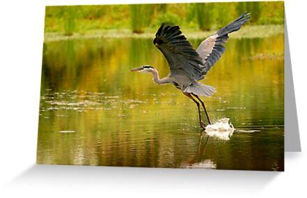 Heron Liftoff by Kenneth Haley