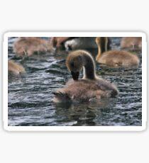 Gosling Sticker