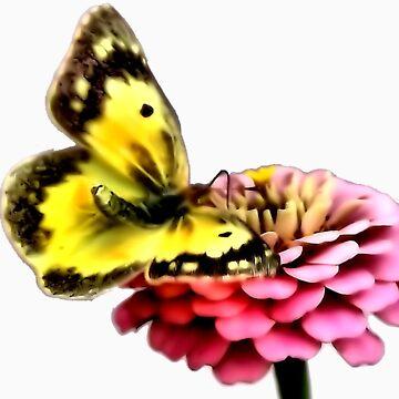 Butterfly by melaniedion