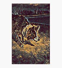 Border Collie - Mesmerizing Eye - Herding Dog - Stylized Painting Photographic Print