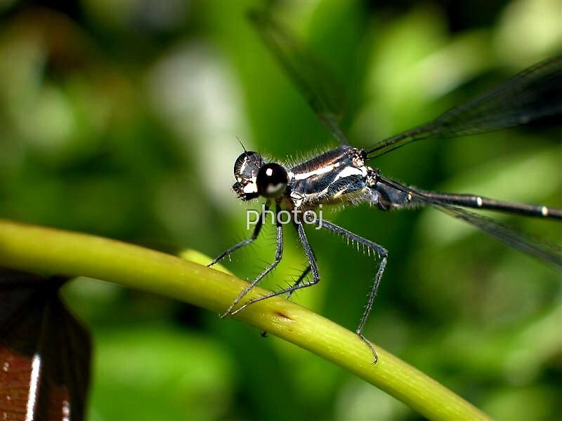 photoj 'Macr Bug' by photoj