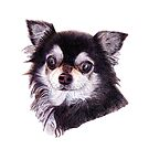 Long Haired Chihuahua by lpodraw