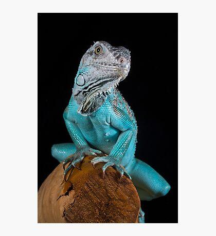 Blue Iguana Photographic Print