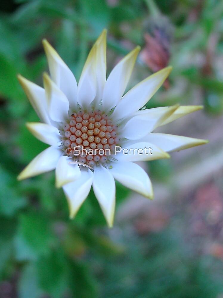 Star Bright by Sharon Perrett