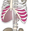 That's your diaphragm way up in your rib cage by lydiamann