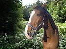 Horse  by Juhan Rodrik