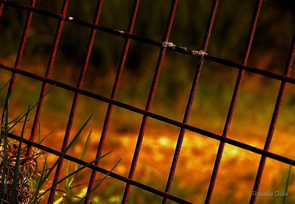 Through the gate by Rosalie Dale