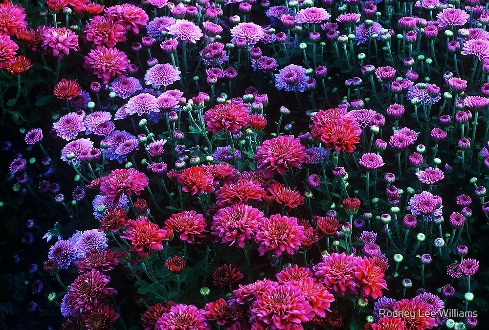 Purple Mood by Rodney Williams