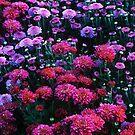Purple Mood by Rodney Lee Williams