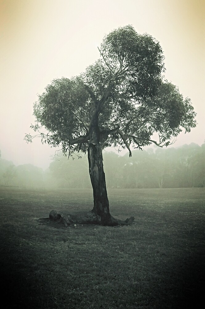 Misty Tree by Nathan T