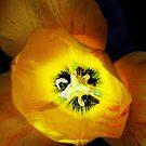 Light bulb. by Paul Pasco