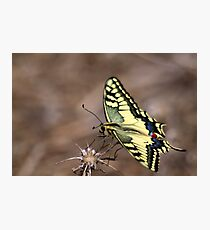 BeautyFly Photographic Print