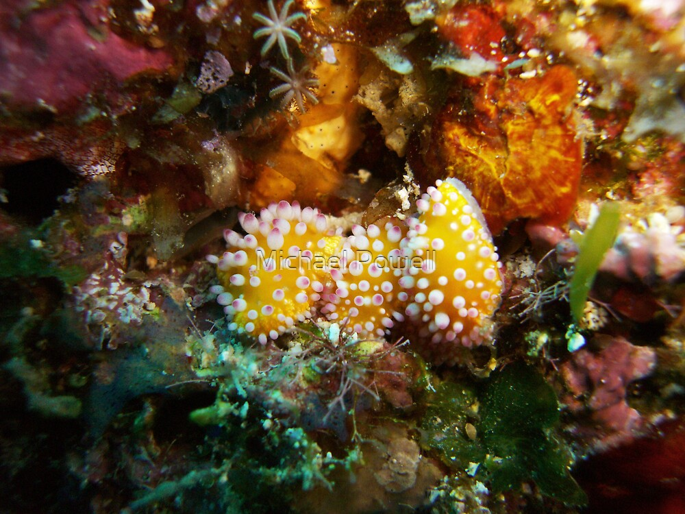 """Nudibranch """"Trio"""" by Michael Powell"""