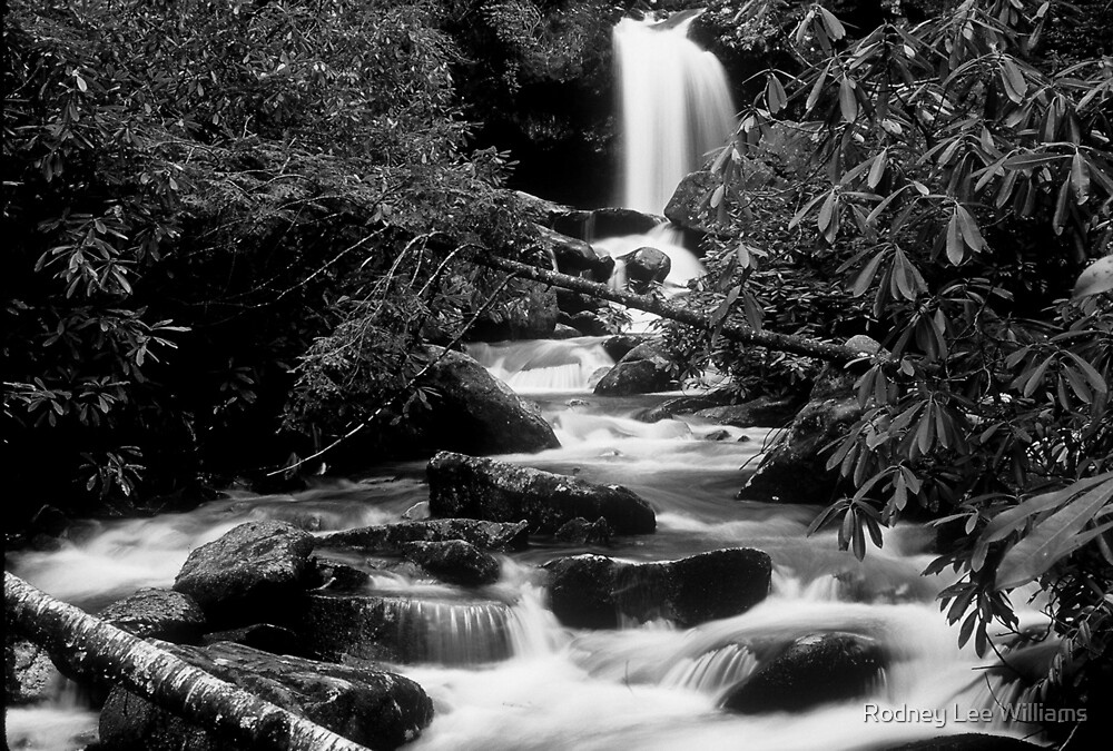Upstream View in the Smoky Mountains by Rodney Lee Williams