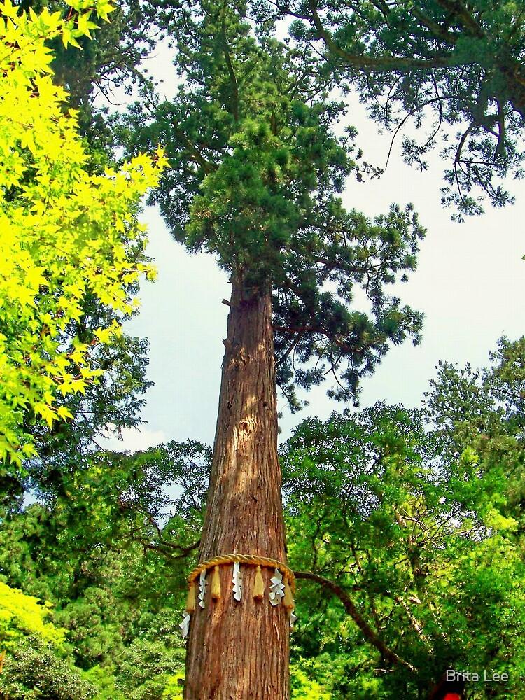 Sacred Cedar Tree by Brita Lee
