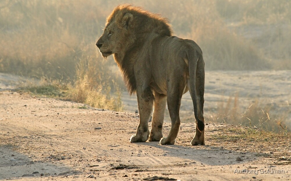 The king surveying his land by Anthony Goldman