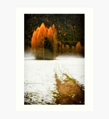 Group of pine trees in the mist Art Print