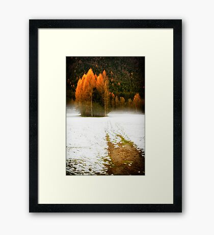 Group of pine trees in the mist Framed Print