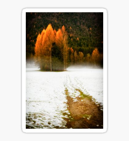Group of pine trees in the mist Sticker