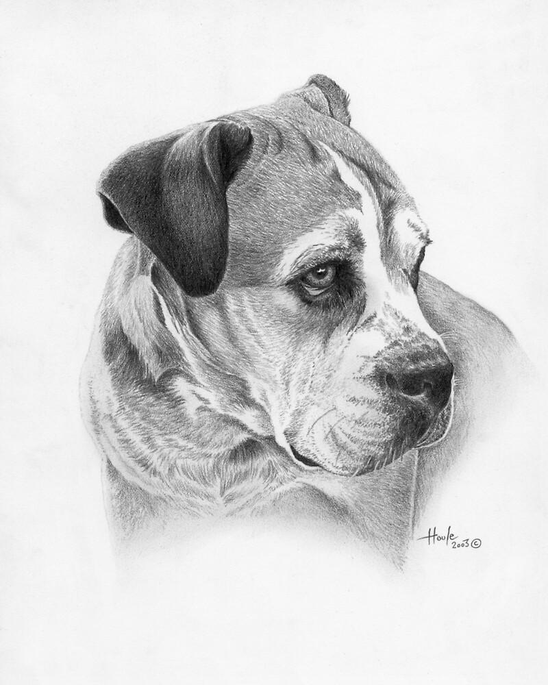 Winston by John Houle