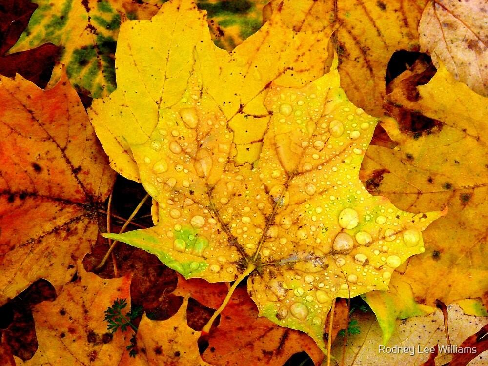 Leaf Portraits 1 by Rodney Williams
