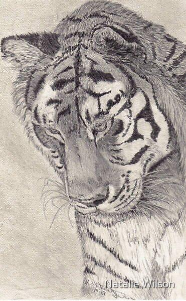 Tiger portrait by Natalie Wilson