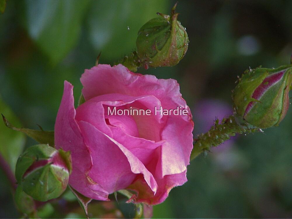 Pink Beauty by Moninne Hardie