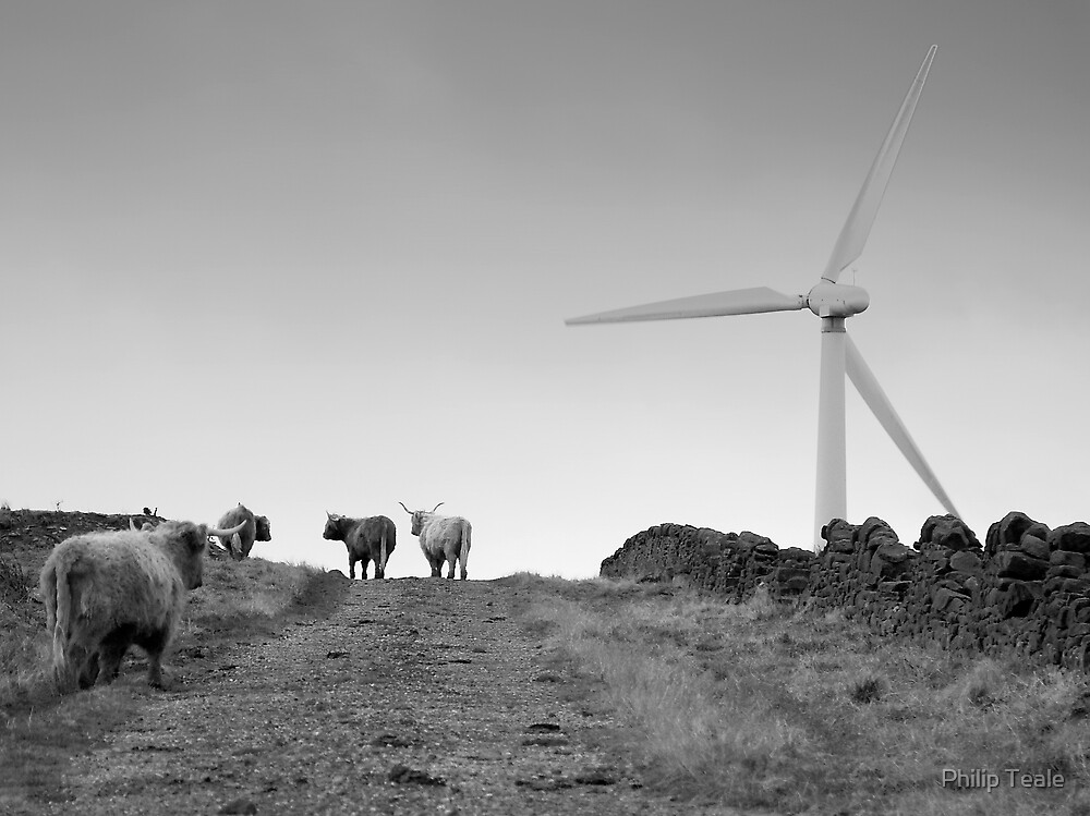 Highland cattle and wind turbine by Philip Teale