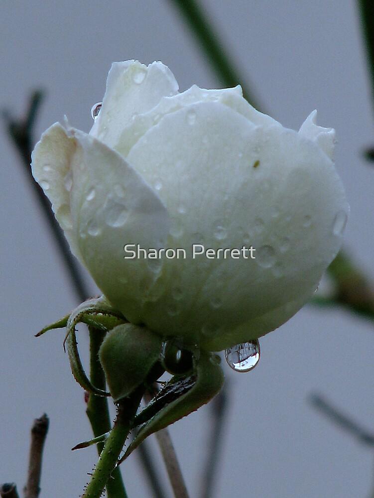 Jesika's Rose by Sharon Perrett