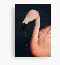 Flamingo After Emerging From The Water Canvas Print