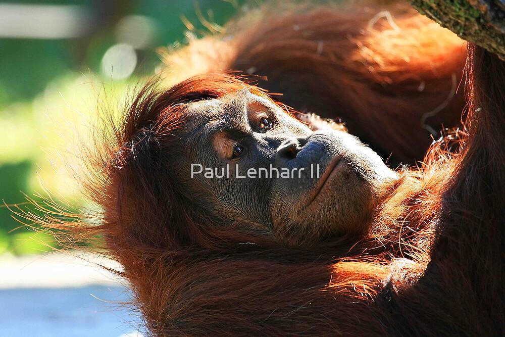 Orangutan by Paul Lenharr II