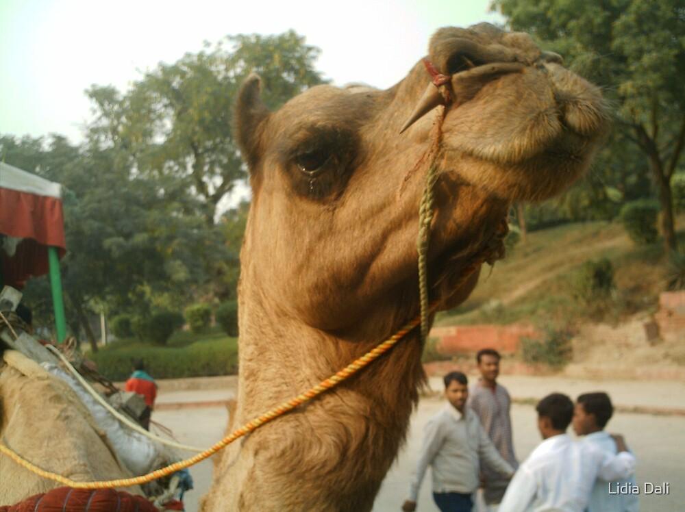 Camel by Lidiya