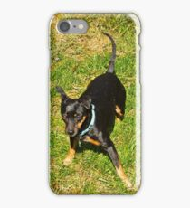 Grover, after a roll in the hay, er grass iPhone Case/Skin