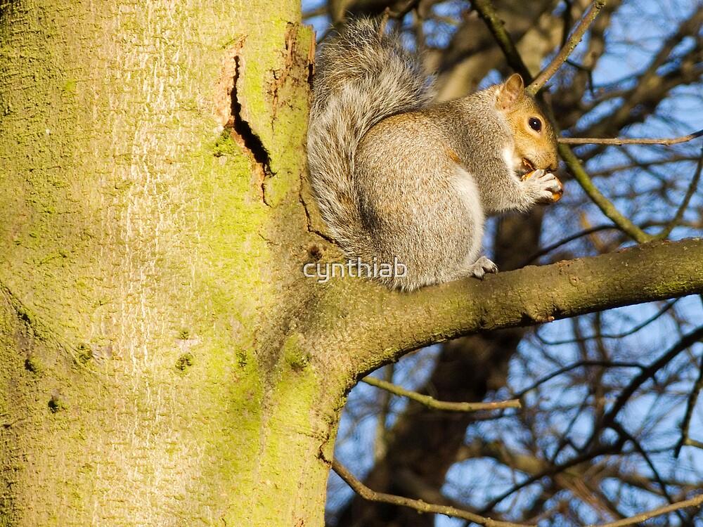 abbingtonpark squirrel by cynthiab
