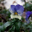 Floral by lucindaD