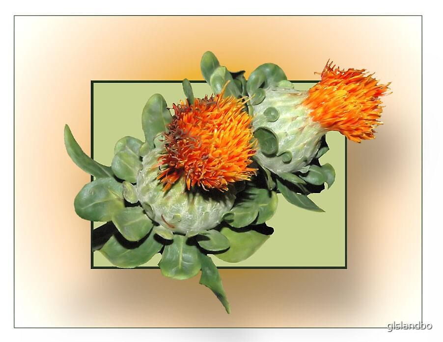 African flower by glslandbo
