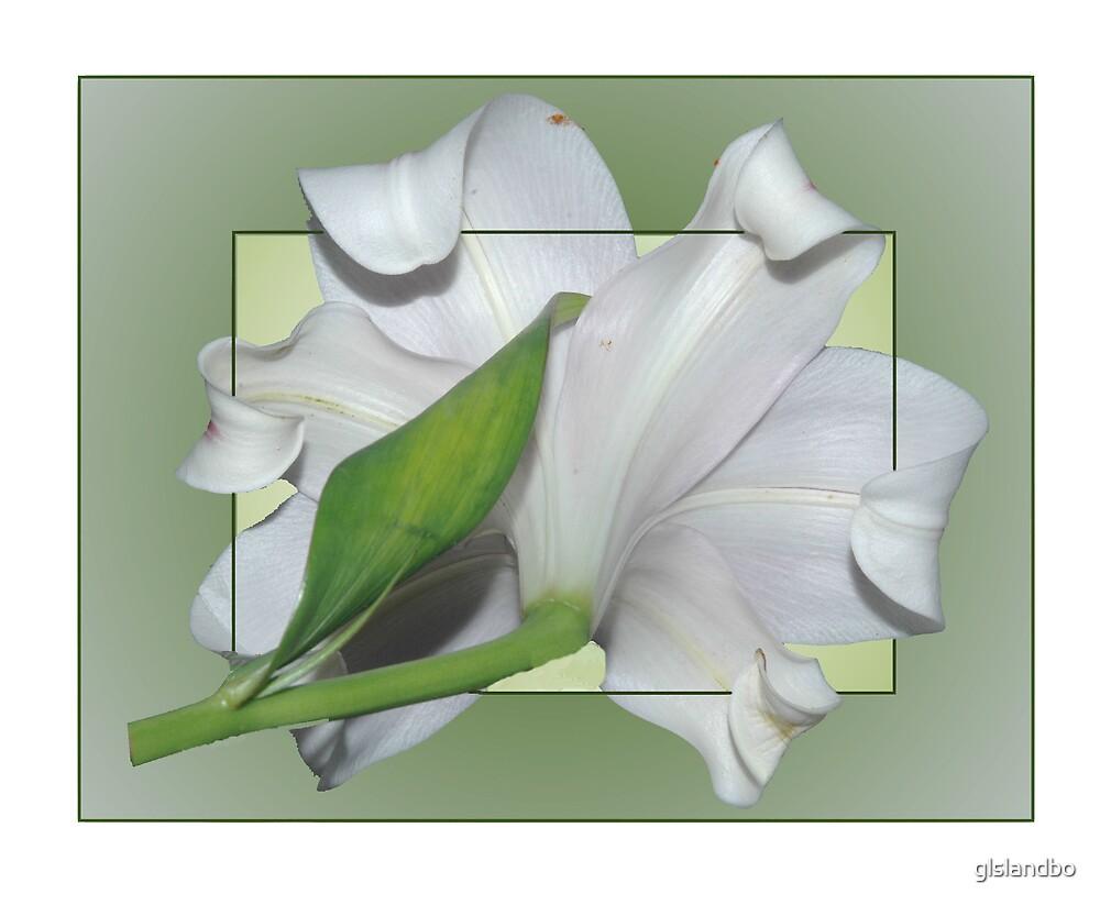 lillie by glslandbo